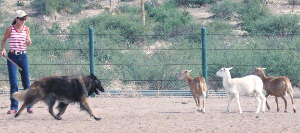 Agility Dog Training Colorado Springs